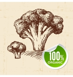 Hand drawn sketch vegetable broccoli eco food vector