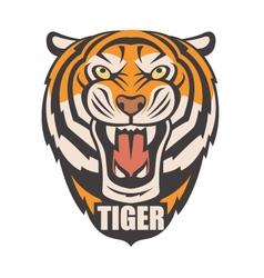 angry tiger image vector image
