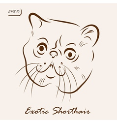 Exotic Shorthair vector image