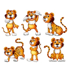 Six positions of a tiger vector