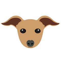 isolated italian greyhound avatar vector image