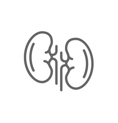 simple kidneys line icon symbol and sign vector image