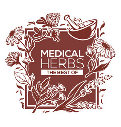 medical herbs flowers plants and leaves vector image