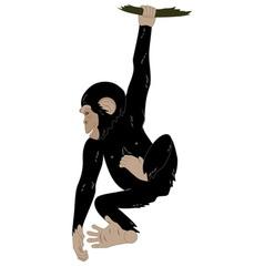 cute monkey vector image vector image