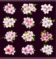 Set of cherry and apple blossom sakura tree vector