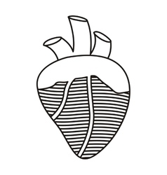 Contour heart with valves and veins vector