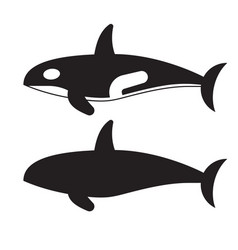 Killer orca whale icon vector