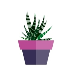 Green house plant in pot leaf cactus flat vector