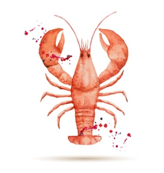 Watercolor lobster vector