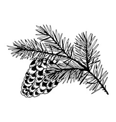 Branch of pine with cone engraving vector