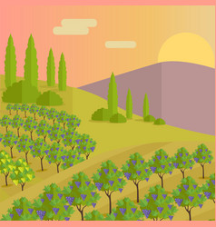 Vineyard plantation of grape-bearing vines vector
