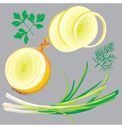 Spring onion parsley dill greens vector
