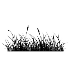Silhouette of grass vector
