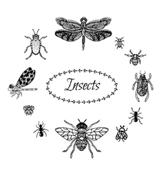 Hand drawn insect set in zentangle style black vector