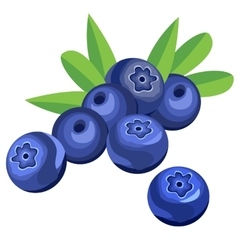 Blueberry berries and leaves vector image vector image