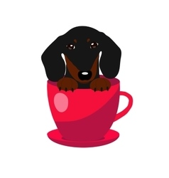 Cute dachshund dog in red teacup vector