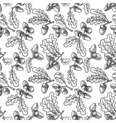 acorns vector image