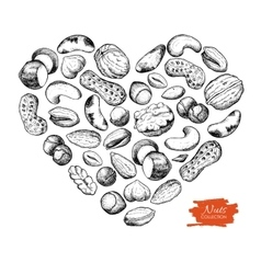 hand drawn nuts in heart shape vector image vector image
