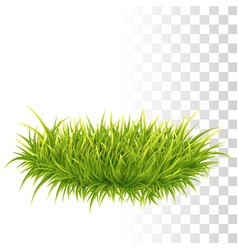 Tussock of green grass vector