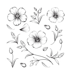 Collection of sakura flowers set vector image vector image