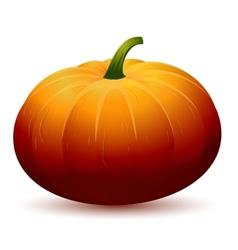 Realistic pumpkin vector