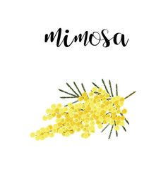 Mimosa branch spring flower vector