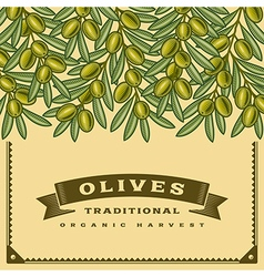 Retro olives harvest card vector