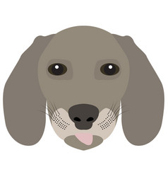 Isolated weimaraner avatar vector