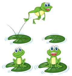 green frogs jumping on water lily leaves vector image