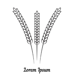 Three wheat spikelet on white background vector