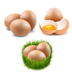 eggs collection vector image vector image