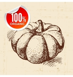 Hand drawn sketch vegetable pumpkin eco food vector
