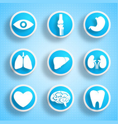 human internal organs collection vector image