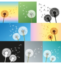 Set of dandelions blowing seeds vector