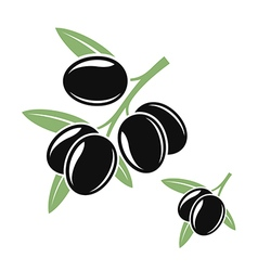 Olive branches with black olives vector image