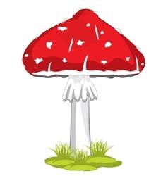 Mushroom fly agaric vector image vector image