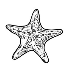 Sea star isolated on white background vintage vector