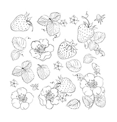 Collection of strawberries elements vector