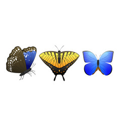 Colorful butterflies with abstract decorative vector