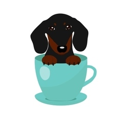 Cute dachshund dog in blue teacup vector