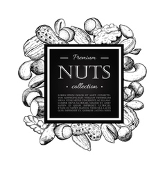 hand drawn nuts Engraved vector image