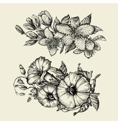 Flower hand drawn sketch bindweed tutsan vector