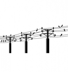 birds on powerlines vector image