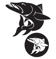 barracuda vector image