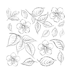 Collection of sakura flowers set vector