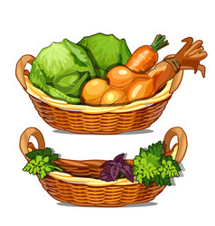 Two baskets with herbs onions carrots cabbage vector