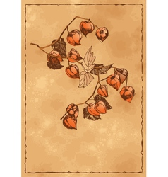 Autumn background with orange physalis vector