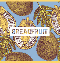 Breadfruit background vector