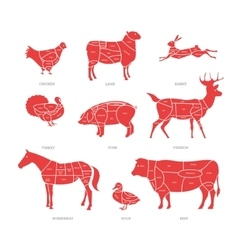 Butcher shop concept  meat vector