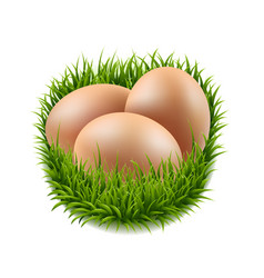 eggs set with grass vector image vector image